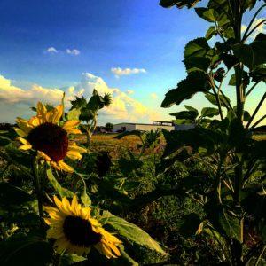 Craig's Blog – From The Garden